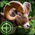 Wild Hunter 3D mod tiền – Game Thợ Săn Hoang Dã cho Android